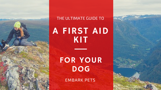 How to Put Together A First Aid Kit For Your Dog