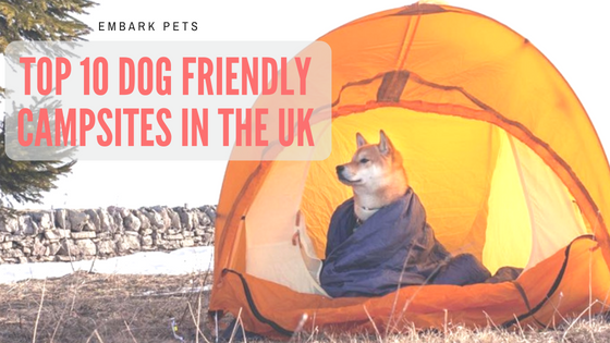 10 Dog Friendly Campsites In The UK