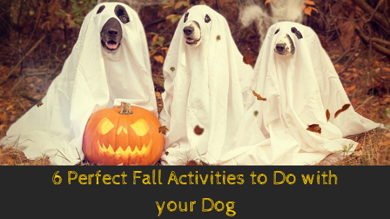 6 Perfect Fall Activities to Do with your Dog