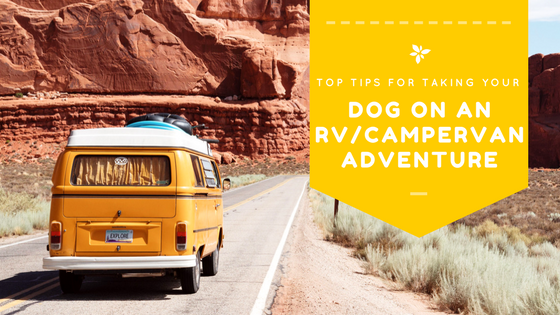 Top Tips for Taking your Dog in a RV or Campervan