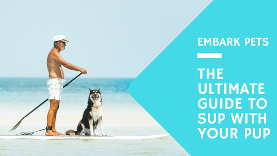 The Guide to Stand-Up Paddle Boarding with your Dog