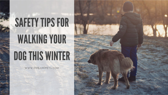 Safety Tips For Walking Your Dog This Winter