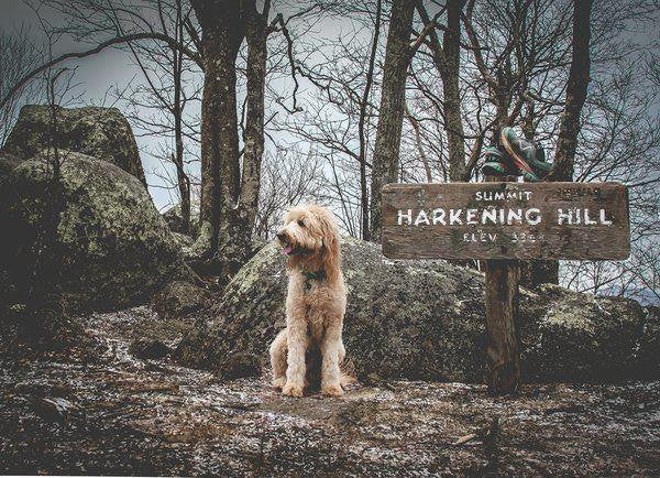 Dog hiking near sign