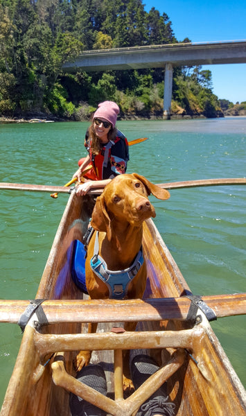 dog on canoe