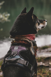 Urban Dog Harness - Baja