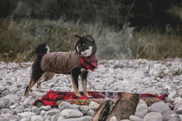 Country Wax Jacket for Dogs