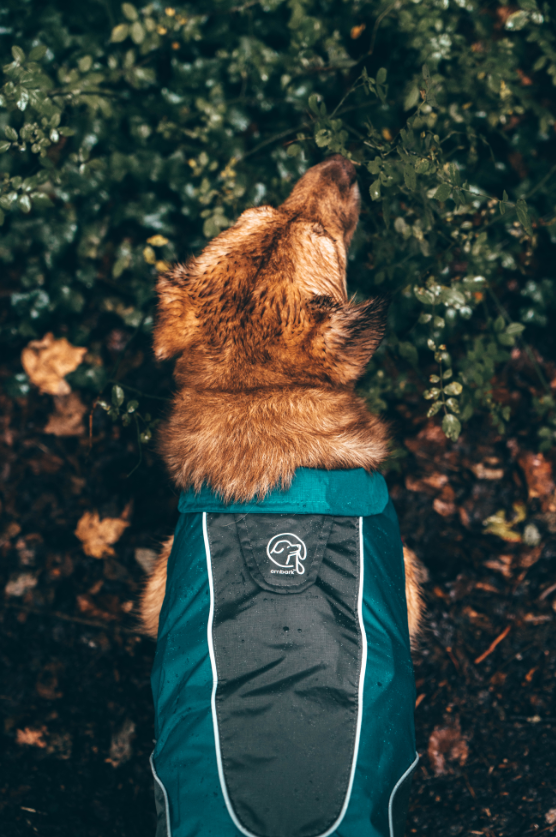 Adventure Dog Rain Jacket
