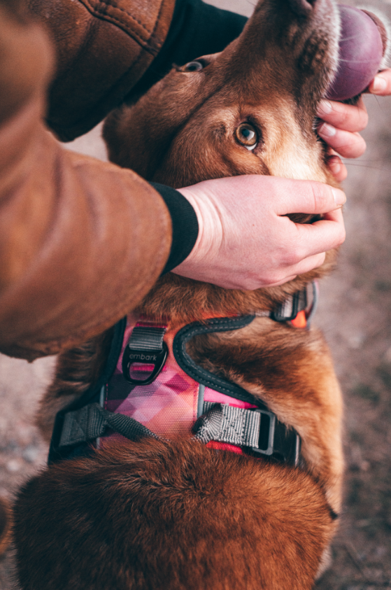 Urban Dog Harness - Aurora
