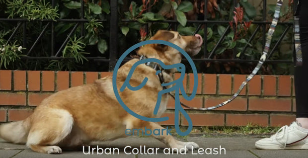 Urban Dog Leash - Azure - 4 Feet Long