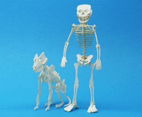 Tinysaurs — tiny skeleton kits