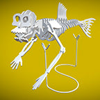 Fiji Mermaid 3D Instructions