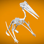 Quetzalcoatlus 3D Instructions