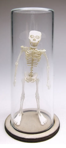 21mm Glass Display Dome in Borosilicate for Tinysaur humanoid skeletons