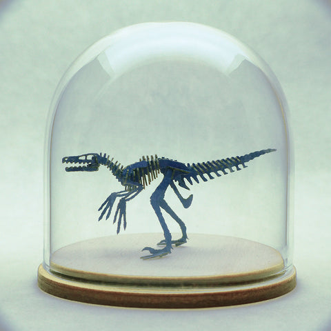 Blue Velociraptor skeleton in glass display dome