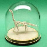 Brontosaurus miniature skeleton model in glass display dome by Tinysaur
