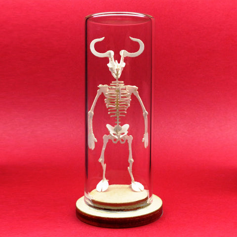Minotaur All-in-one miniature skeleton model kit