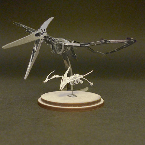 Assembled Metal Earth Pteranodon kit with Tinysaur Pterodactyl miniature skeleton model for scale