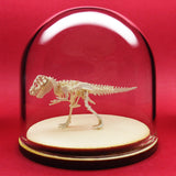 True Rex miniature skeleton model in hand-blown glass display dome by Tinysaur.us