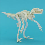 White Velociraptor miniature skeleton model