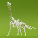 Brontosaurus tiny skeleton model on green background by Tinysaur