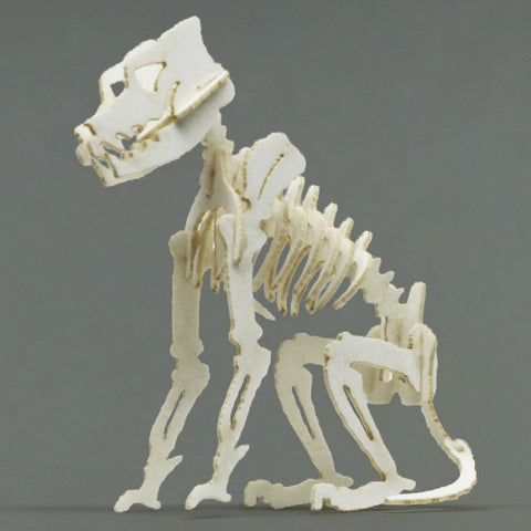 Canine miniature skeleton model