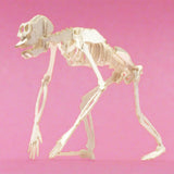 Chimpanzee miniature skeleton model