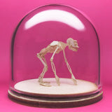 Chimpanzee All-in-one miniature skeleton model kit