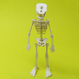Assembled Cyclops miniature skeleton model by Tinysaur.us