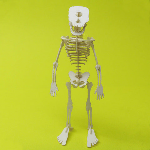 Cyclops miniature skeleton model