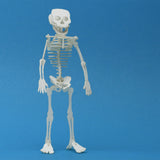 Tiny Human miniature skeleton model