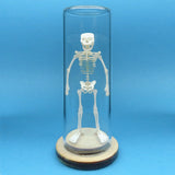 Tiny Human All-in-one miniature skeleton model kit