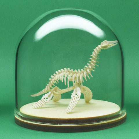 Plesiosaur miniature skeleton model in glass display dome by Tinysaur.us