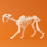 Saber Tooth miniature skeleton model