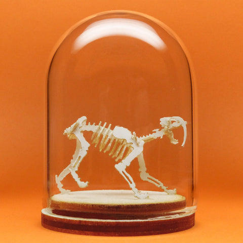 Saber Tooth All-in-one miniature skeleton model kit
