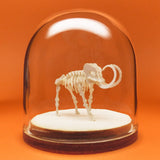 Woolly Tiny All-in-one miniature mammoth skeleton model kit
