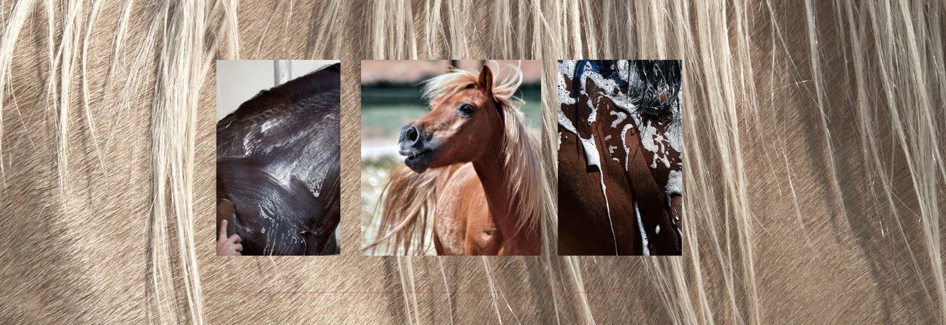Horse Shampoos, Conditioners & Coat Care