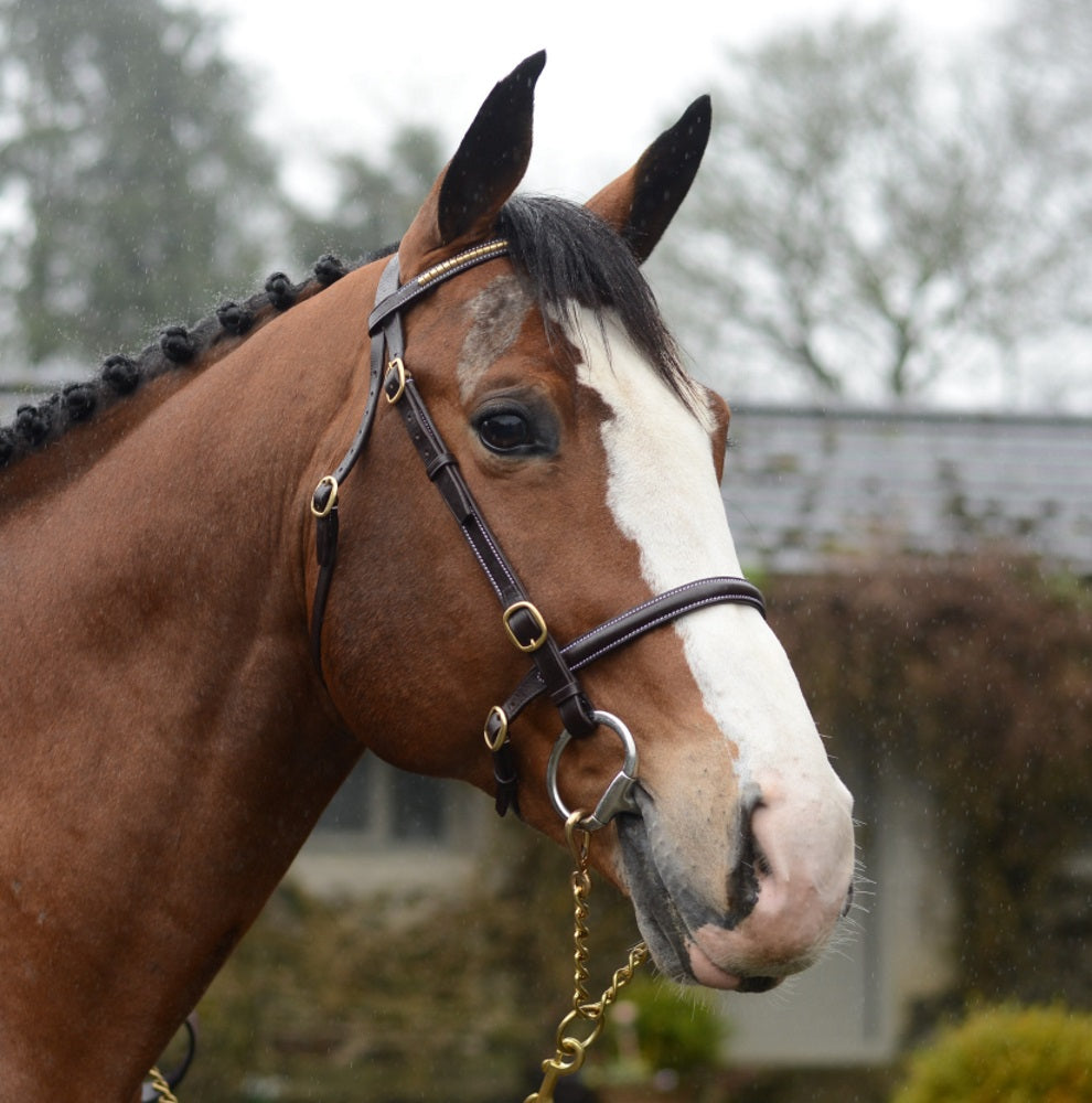 Mackey Classic Showing In-hand Clincher Bridle - RedMillsStore.ie