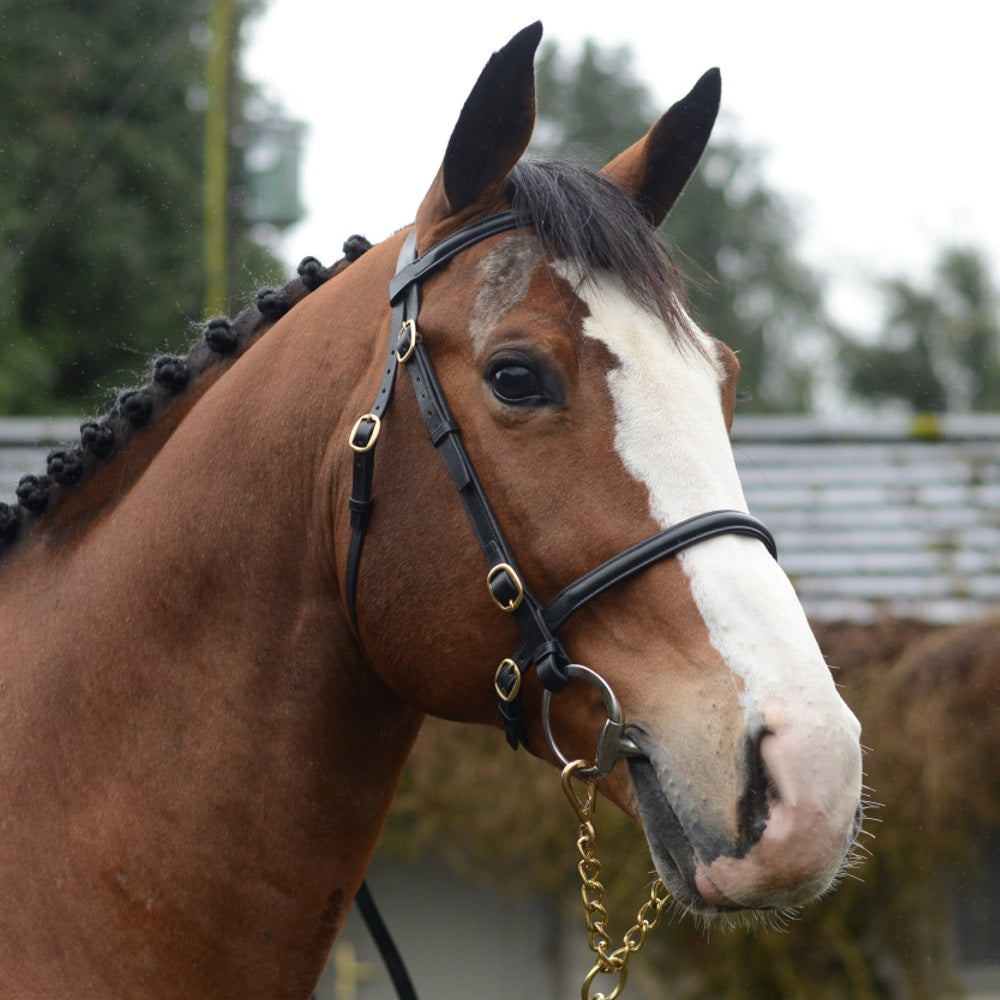 Mackey Classic Showing In-hand Plain Bridle - RedMillsStore.ie
