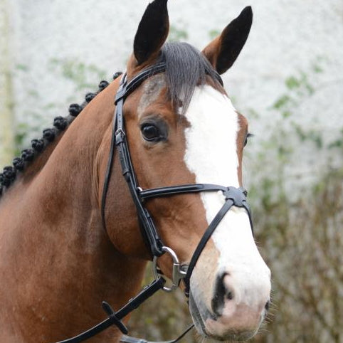 Mackey Classic Grackle Bridle & Reins - RedMillsStore.ie