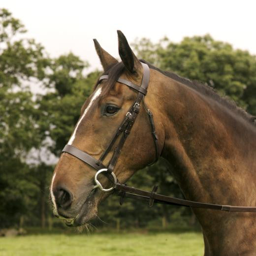 Mackey Classic Hunt Bridle and Reins