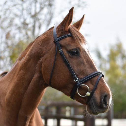 Mackey Equisential Flash Bridle - RedMillsStore.ie
