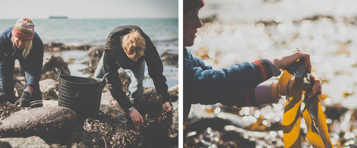 The Cornish Seaweed Company and Living Sea Therapy