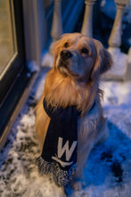 Load image into Gallery viewer, Bailey the dog wearing a Warren Knit Scarf sitting in the snow.