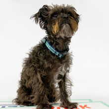 Load image into Gallery viewer, Small brown dog with Bailey's Running Mate collar.  (4166791397485)