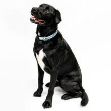 "Large black and white dog with ""Bailey's Running Mate"" collar."