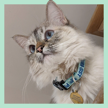 Load image into Gallery viewer, PURR-SIST Cat Collar on fluffy cat. (4166678052973)