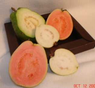 Guava Fruit Gift Box