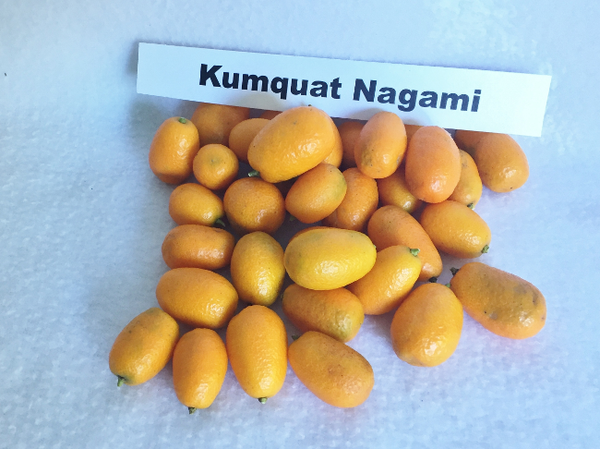 Kumquat Fruitbox Case