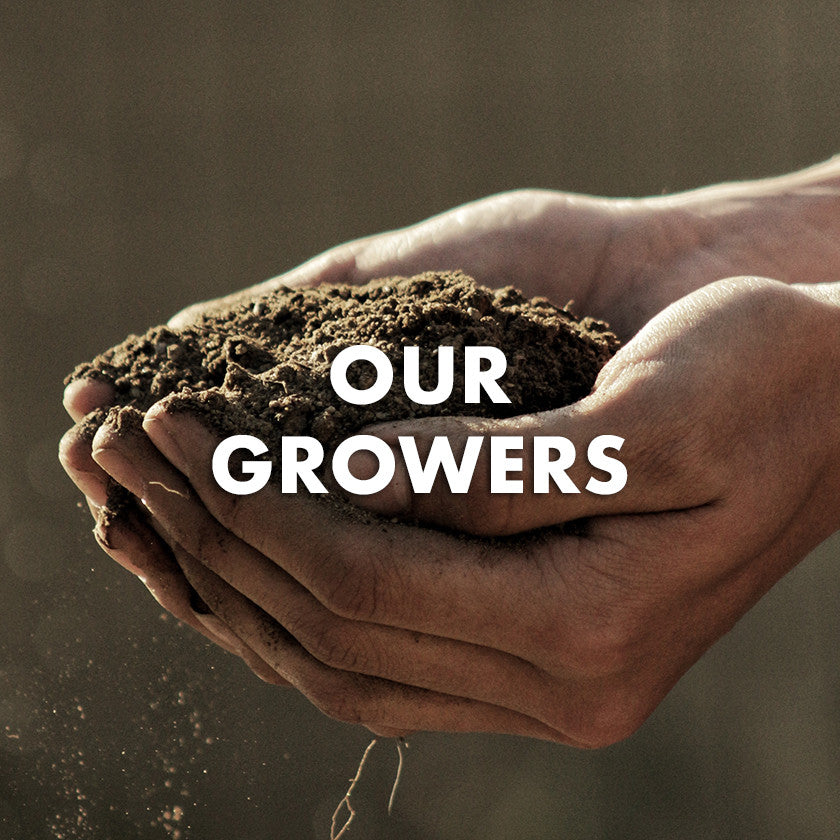 Farmers hands with soil