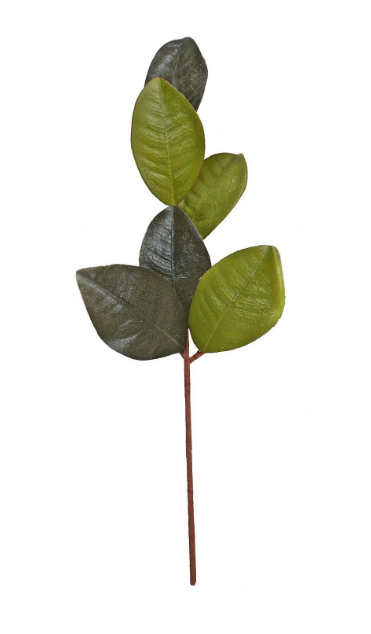 Green Grand Magnolia Leaves